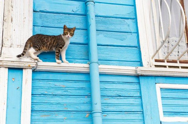 Jak pies z kotem. Co robi� koty, kiedy ich nie ma?