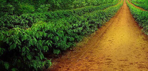 Podróż do źródeł kawy