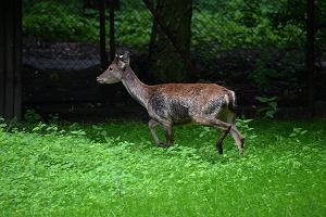 Poznańskie zoo ma nowych mieszkańców