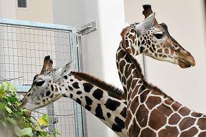 W krakowskim zoo znikn� klatki z kratami. Zast�pi� je szyby