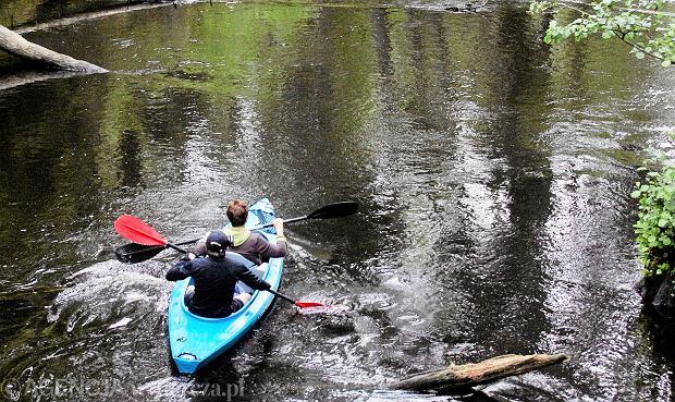 Spływ kajakowy (zdjęcie ilustracyjne)