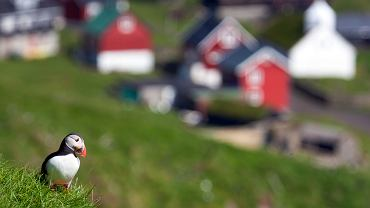 Kolorowe domki i maskonury to niejedyne wizytówki Islandii