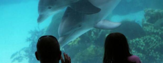 Wychowanie? Z drogi matko-tygrysico, czas na ojca-delfina!