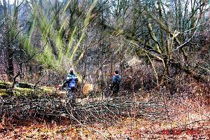 Wycinka drzew. 200-letnie drzewa na Białołęce wycięto pod budowę domów. Jest dowód
