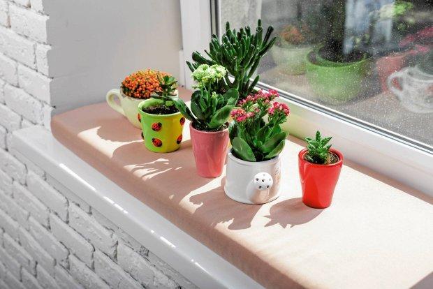 Jak dbać o rośliny doniczkowe w sezonie grzewczym?