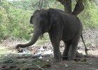 Tragedia w Tajlandii: Brytyjski turysta zgin�� na oczach c�rki zabity przez s�onia