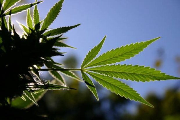 """Marihuana - """"nowy"""" wspaniały lek?"""