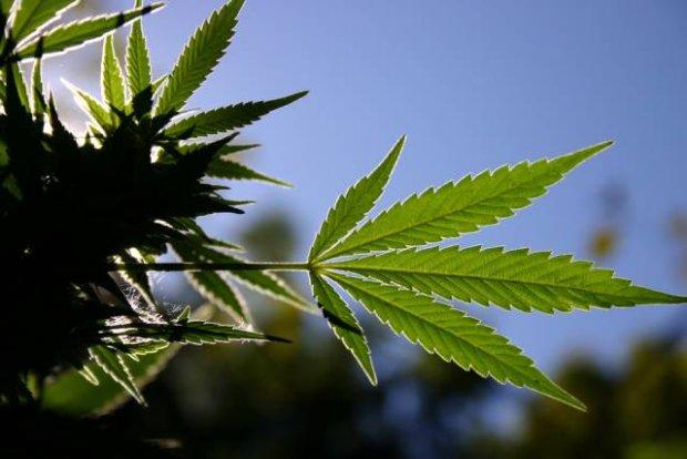 """Marihuana - """"nowy"""" wspania�y lek?"""
