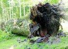 Dąb Bolesław powalony przez wichurę. Był jednym z najstarszych drzew w Polsce [ZDJĘCIA]