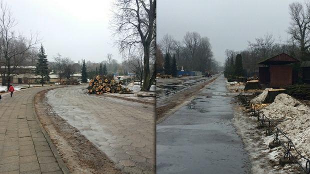 Główna aleja warszawskiego zoo ogołocona z drzew. Znów alarm o wycince