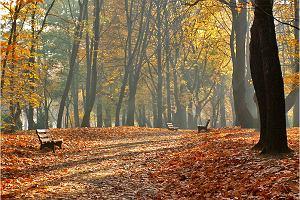Kalendarzowa jesień. Początek będzie obiecujący, ale później... Ulewy i gwałtowne ochłodzenie