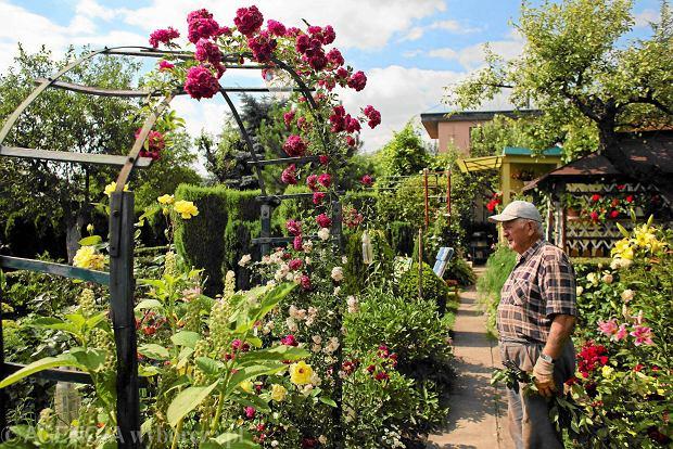 Działkowcy będą mogli przejąć swoje ogrody