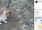"""Śliczny szczeniaczek przywiązany w lesie za szyję. Właścicielka miała """"złe warunki"""""""