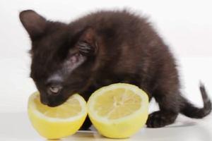 Dzielisz się jedzeniem z psem i kotem? Możesz zrobić im krzywdę!