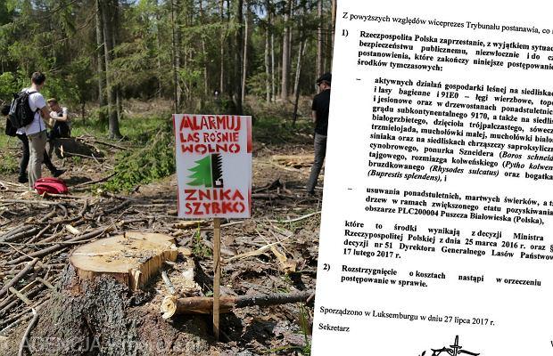 Trybunał Sprawiedliwości UE nakazał natychmiastowe wstrzymanie wycinek w Puszczy