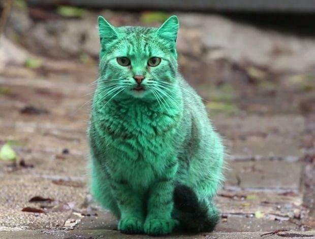 W Bułgarii Grasuje Zielony Kot To Nie żart