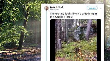 Mężczyzna nagrał 'oddychający las' w kanadyjskim Quebecu