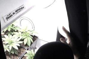 Dom spokojnej staro�ci a w nim... hodowla marihuany