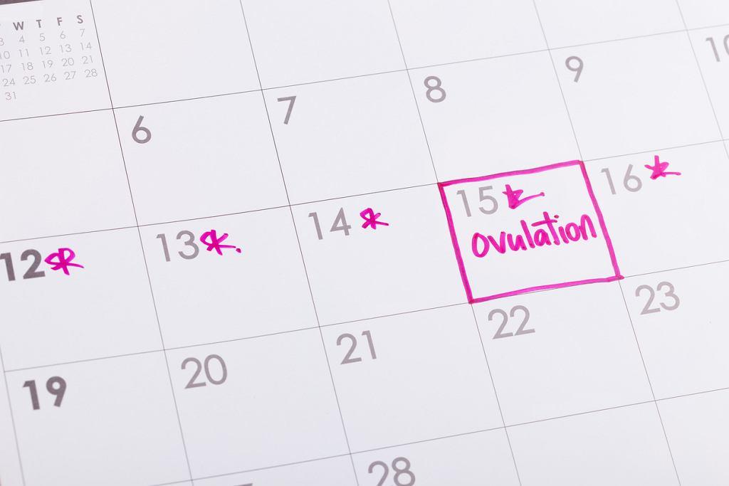 Jeśli staramy się o dziecko, warto wiedzieć, kiedy mamy owulację. Kalendarzyk dni płodnych pomoże nam to kontrolować.
