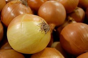 Cebula - szczególnie zdrowa na surowo. Wartości odżywcze i właściwości lecznicze cebuli