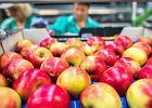 Jemy coraz mniej jabłek, choć produkujemy ich najwięcej w Europie