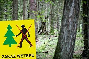 """Na majówkę zakaz wstępu do Puszczy Białowieskiej w Hajnówce. """"Martwe drzewa zagrażają bezpieczeństwu"""""""
