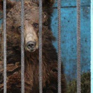 W�a�ciciel porzuci� zoo wraz ze zwierz�tami. Znale�li je ludzie z pobliskiego miasta