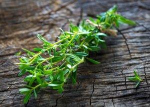 Cząber ogrodowy uprawa