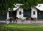 Kupił konie w stadninie w Janowie Podlaskim. Jeden chory, drugi za mały. Co na to prezes?