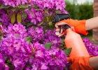 Naturalne metody zwalczania szkodników roślin