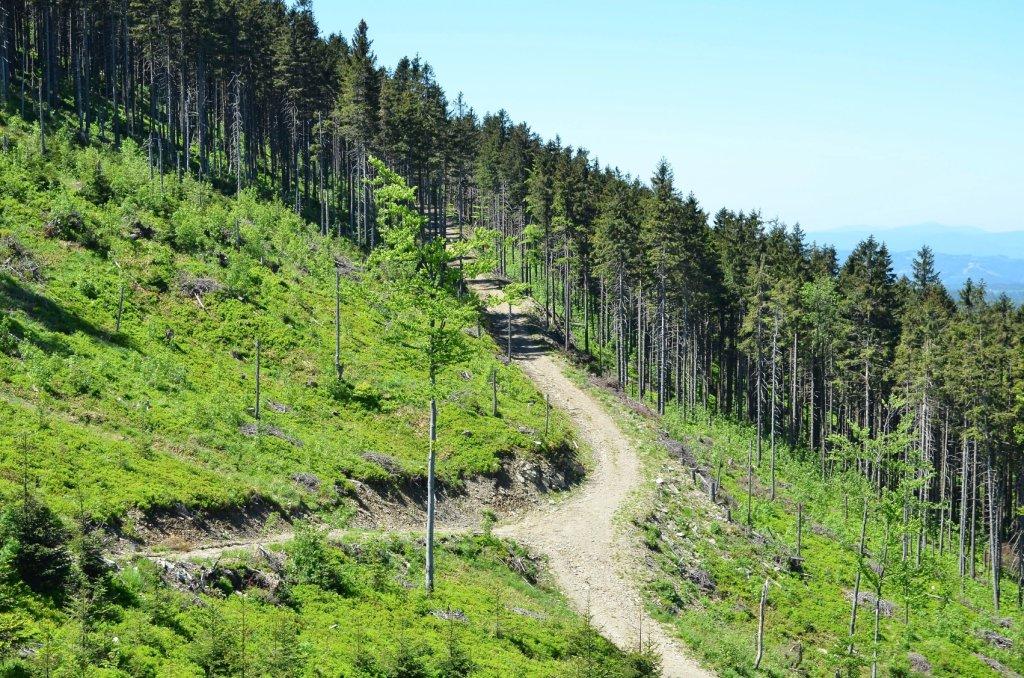 Wakacje w górach to doskonały pomysł - miejscowości turystyczne na południu Polski są znakomicie przygotowane na przyjazd turystów.