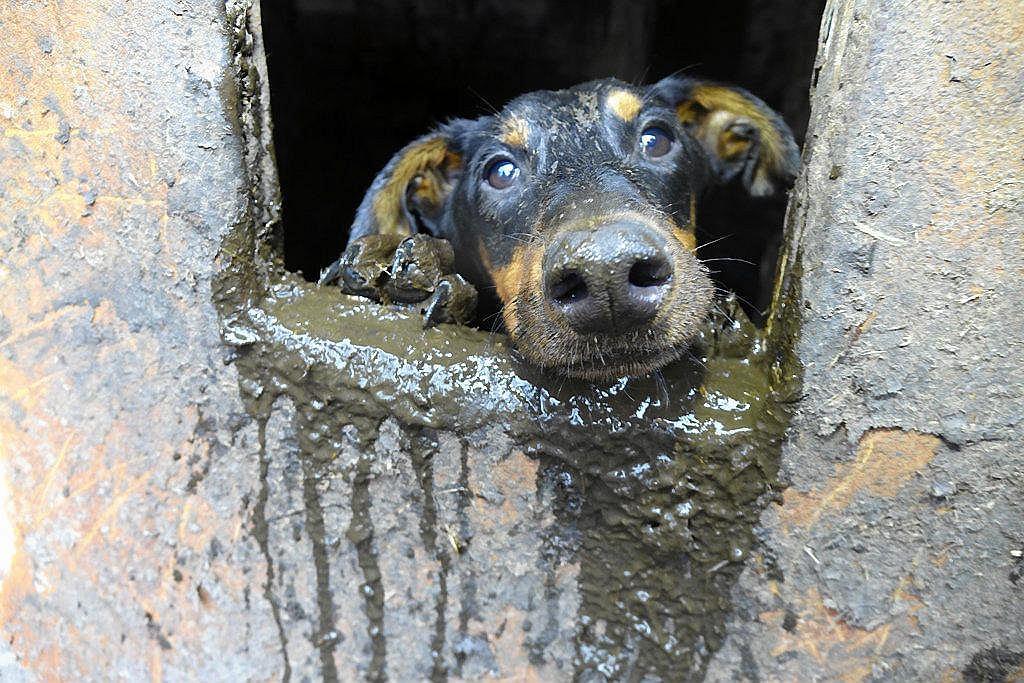Interwencja Pogotowia dla Zwierząt w Starym Czarnowie. Z prywatnej posesji wywieziono ponad sto psów