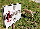 Zakaz wyprowadzania ps�w do park�w czy na place zabaw jest niezgodny z prawem [TYLKO U NAS]