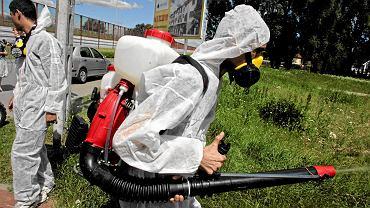 Opryski przeciw komarom i kleszczom