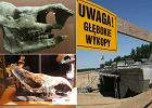 Pradziejowy nosorożec odkryty pod Gorzowem Wielkopolskim
