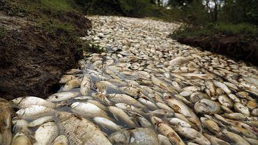 Rzeka Confuso w Paragwaju leży 30 km od Asuncion