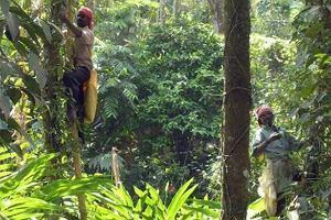 W Indiach pracownicy zamkni�tych plantacji herbaty umieraj� z g�odu