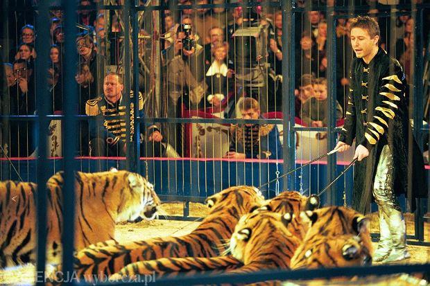 Holandia wprowadza zakaz wykorzystywania dzikich zwierz�t w cyrku