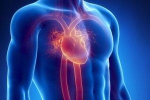Serce [ANATOMIA CZŁOWIEKA]