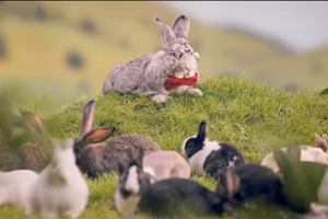 Ministerstwo Zdrowia apeluje do młodych par: Bierzcie przykład z królików