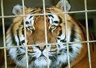 Zakaz prezydenta. Stop dla cyrków z żywymi zwierzętami w Opolu