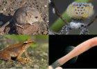 Nowe gatunki zwierz�t, kt�re poznali�my w 2014 roku