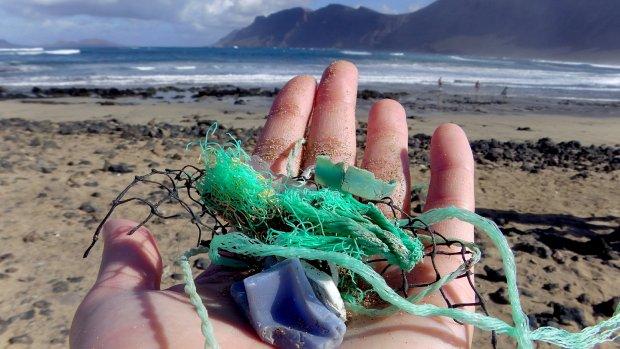 Ptaki ton� w plastiku