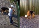 Maratończyk, który pozbył się psa rezygnuje z biegu. Tłumaczy też dlaczego porzucił sunię