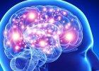 Mózg nam rośnie. Nawet w dorosłości