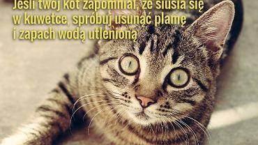 Jeśli kot jest zdrowy i zadowolony z życia, a kuwetka czysta, nie powinny się pojawiać żadne problemy z siusianiem tam, gdzie nie trzeba