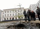 Wycinka drzew. Władze Warszawy zmienią przepisy, aby ratować drzewa?