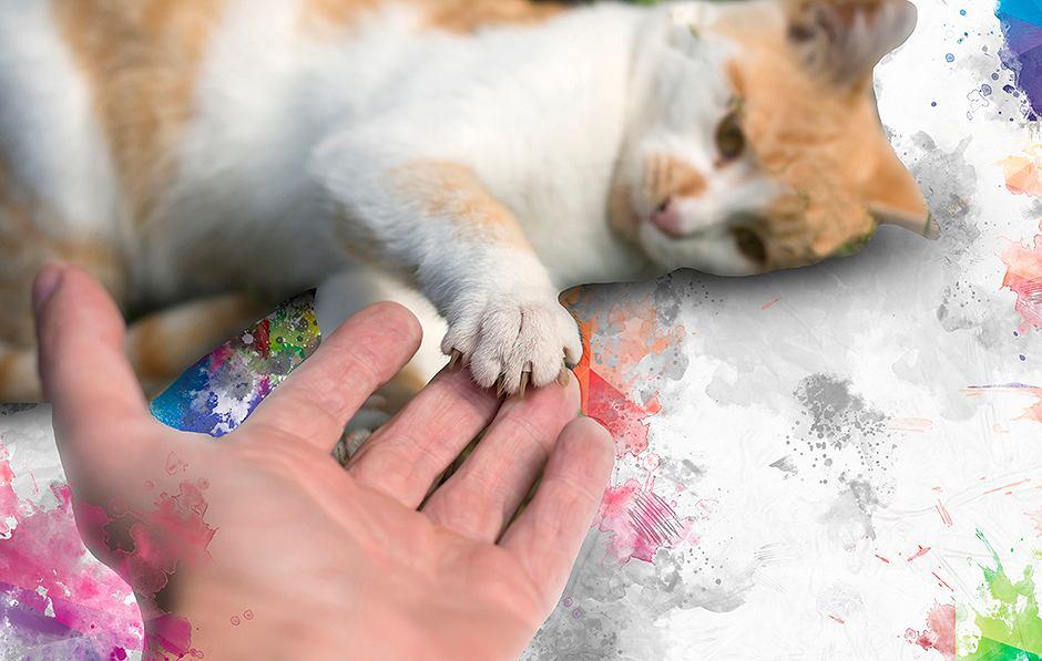Mój Kot Kocha Mnie Czy Miskę Z Jedzeniem Behawiorystka Tłumaczy