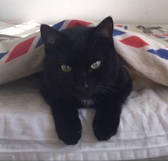 Kot zaginął podczas lotu z Oslo do Warszawy