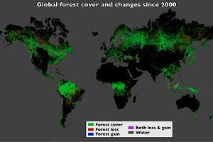 Tak gin� lasy: od pocz�tku XXI wieku uby�o ich pi�� razy wi�cej, ni� mierzy powierzchnia Polski [MAPA]